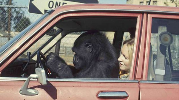 Koko y Penny, en un auto