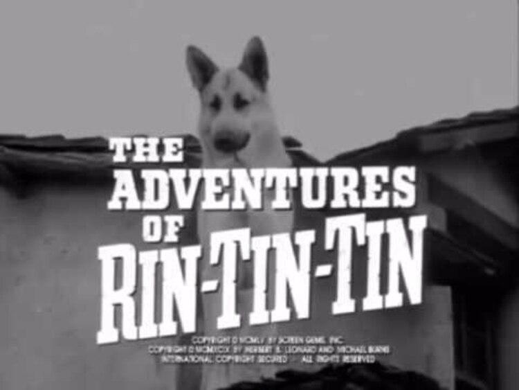 Rin Tin Tin fue el nombre de varios perros que fueron estrellas de Hollywood (Foto: Especial)