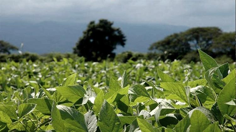 En el primer semestre de este año las exportaciones del complejo sojero sumaron 7.597 millones de dólares (24,7% de las exportaciones totales)