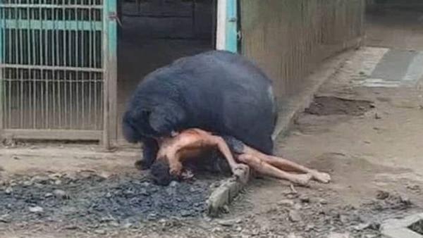 animal por