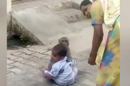 La mujer intentó distraer al mono, pero éste abrazaba al niño (Foto: NewsLionsMedia)