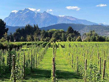 """Este viernes 30 de octubre se realizará la """"Expo Vinos de la Patagonia"""" donde participarán más de 20 bodegas de la región, este año la edición será virtual"""