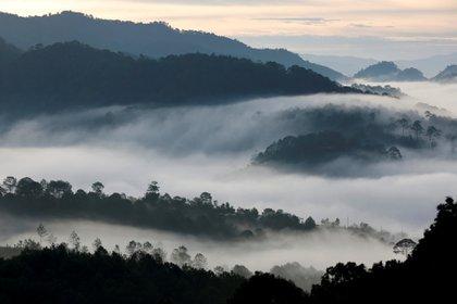 Panorámica de la sierra de Guerero (Foto: REUTERS / Carlos Jasso)