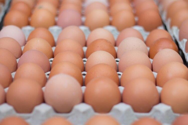 El gobierno congeló el precio por 60 días más de determinados productos para la venta, entre los que se encuentra el huevo