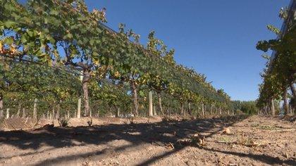 La vitivinicultura atraviesa un momento complicado, aunque empieza a reflejar ciertas mejoras