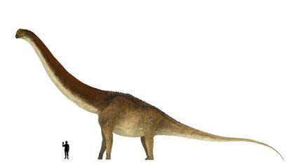 """Científicos sostienen que """"se considera uno de los saurópodos más grandes jamás encontrados, probablemente superando en tamaño a Patagotitan"""" (Cretaceus Research)"""