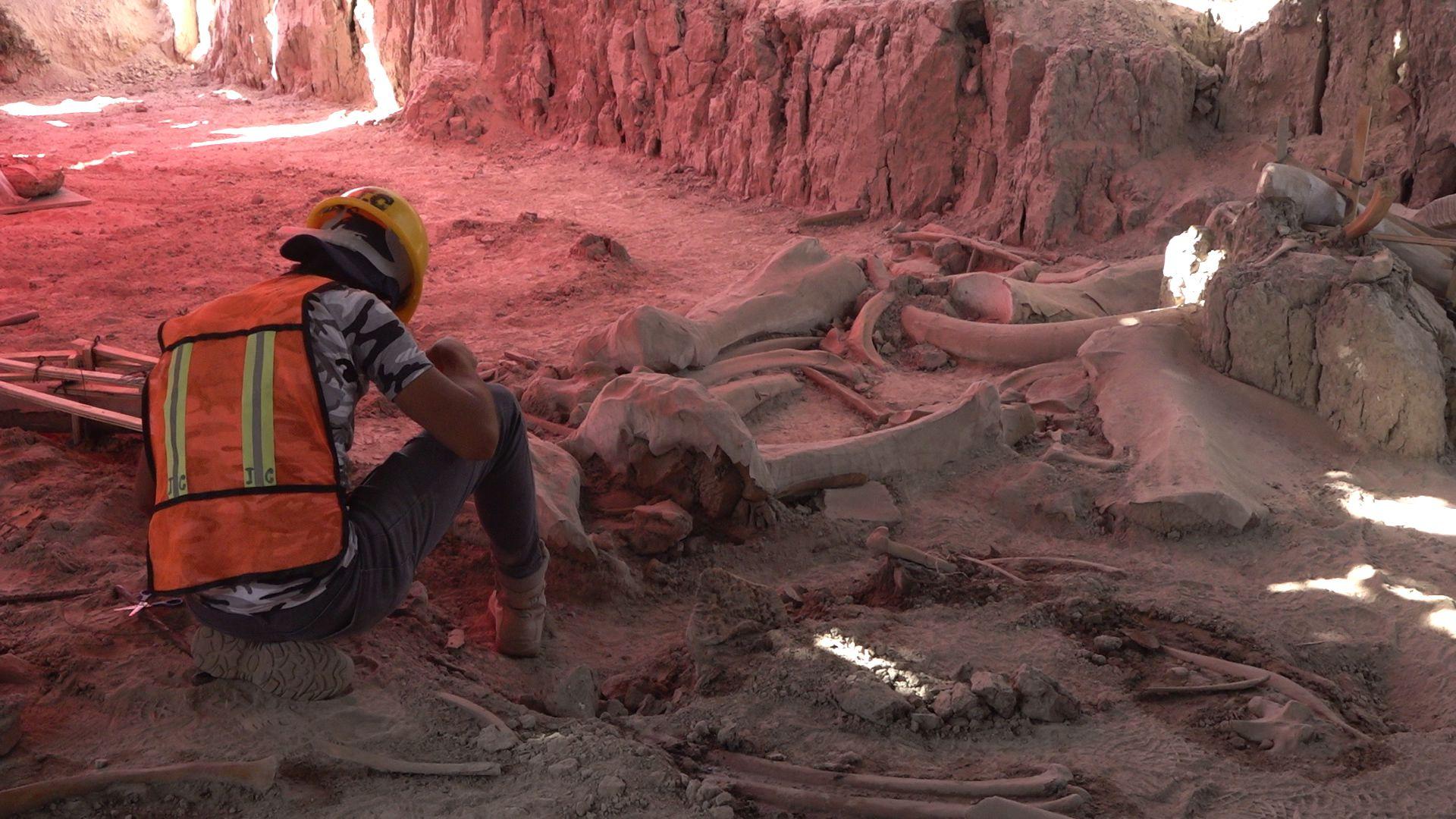 MAMUT - MAMUTS - HUESOS - ARQUEOLOGIA - INAH - MEXICO - AEROPUERTO - SANTA - LUCIA - 12112020
