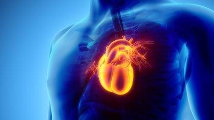 Científicos revelaron la causa de la ubicación y localización concreta del corazón (iStock)