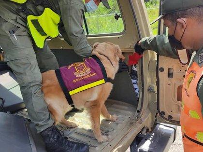 Gracias al canino detectaron la droga