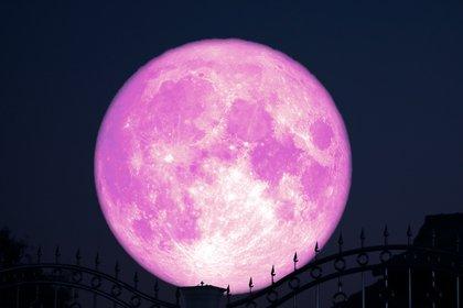 Algunos consideran que esta Luna llena es la Luna Rosa, y que su nombre proviene de las rosas que florecen a fines de junio (Shutterstock)