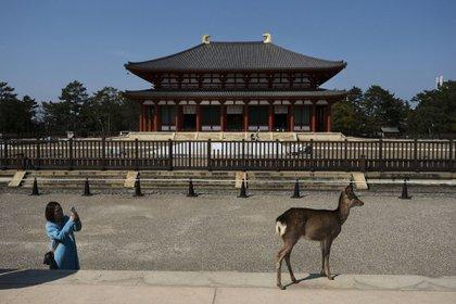 Una turista fotografía un ciervo en el templo Kofukuji en Nara, Japón (Foto AP / Jae C. Hong)