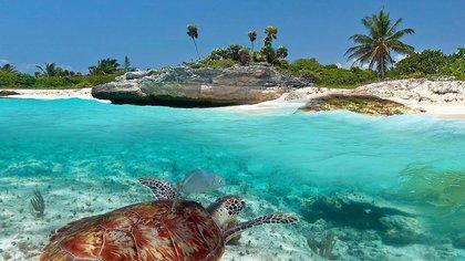 Xcacel es una playa que se considera un punto indicativo del estado de salud de las tortugas marinas (Foto: Sectur Quintana Roo)