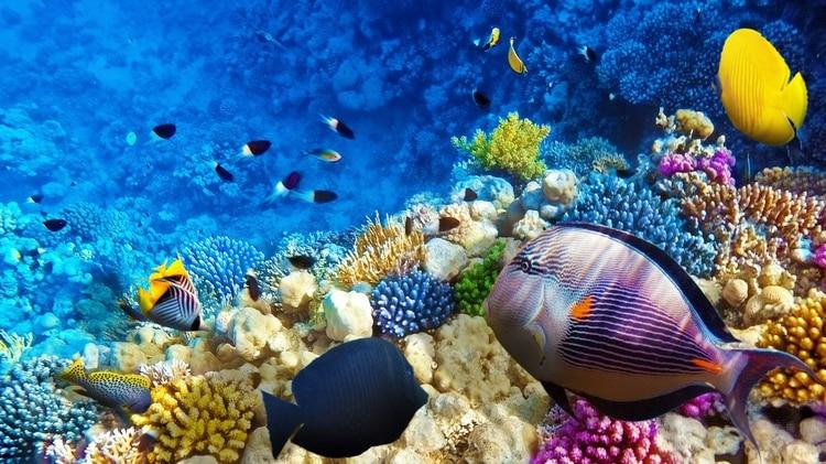 El océano se enfrenta a una extinción masiva similar a la de los dinosaurios