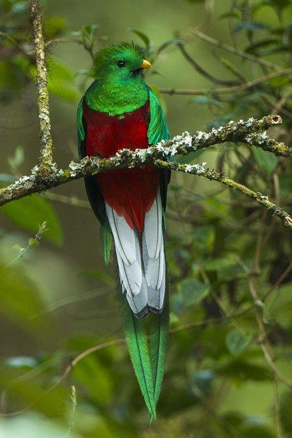 Quetzal (Foto: Wiki Commons)