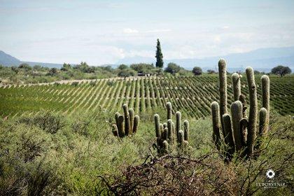 Hay dos caminos, comprar un viñedo ya plantado, o plantarlo desde cero