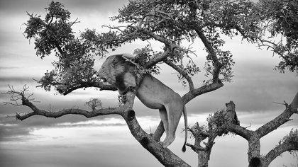 Safari por sudáfrica<br>  Nathan Stone / National Geographic Photo Contest 162