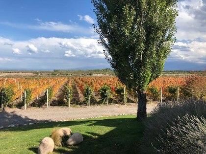 Tupungato Winelands, es un wine country club situado en el Valle de Uco, Provincia de Mendoza, al frente de la Cordillera de los Andes. El emprendimiento tiene una superficie de 800 hectáreas y, entre varios productos, ofrece hileras de viñedos para los inversores