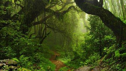 Al medir las ceras vegetales como indicador, los científicos hallaronque la tala reduce la capacidad del suelo para retenerun factor clave del efecto invernadero