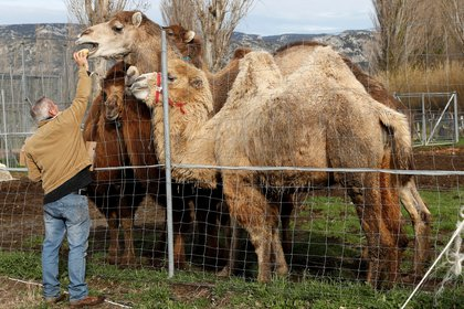 El hallazgo refuerza la necesidad de vigilar a los animales que están o pueden llegar a estar en estrecho contacto con los humanos como por ejemplo sucede en reservorios zoonóticos, para prevenir posibles brotes en el futuro (REUTERS/Eric Gaillard)