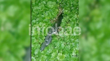 El cuchillo con el que la madre asesinó a su hija en Flores