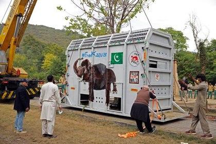 Expertos en animales se reúnen junto a una caja elevada por una grúa en la que se transporta a Kaavan, un elefante que viajará a un santuario en Camboya, en el zoológico de Marghazar en Islamabad, Pakistán (REUTERS/Saiyna Bashir)