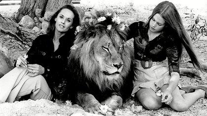Originalmente, el guion requería de 50 leones, pero la cantidad de animales creció a 132 ( Credit: Photo by Willi Schneider/Shutterstock (5331373f)