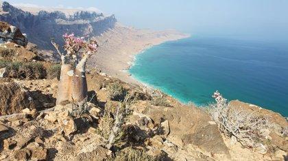 Socotra tiene una de las floras isleñas con mayor peligro de desaparición en el mundo (Shutterstock)