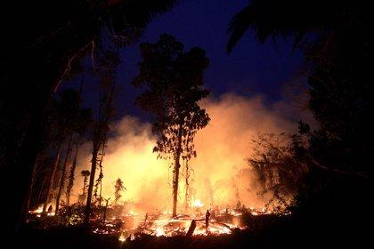Las llamas cubren una gran parte de la selva amazónica en Rondonia