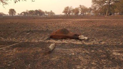 Imagen luego de los incendios en el campo de Muchutti