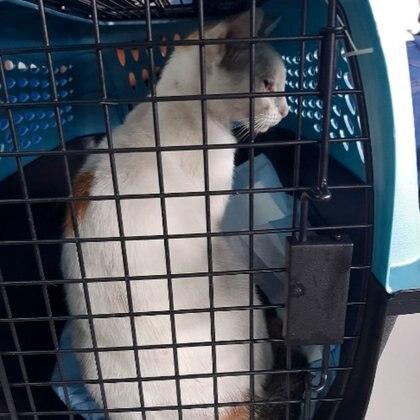 El felino se encuentra en buen estado de salud y fue llevado a un centro de adopción Foto: (AFP)