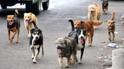 El abandono de las mascotas es un grave problema que hace proliferen los canes callejeros que a su vez se reproducen y tienen más crías Foto: Archivo