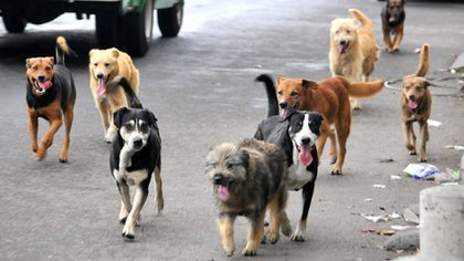 Cerca de 500,000 perros y gatos son abandonados al año en México Foto: Archivo