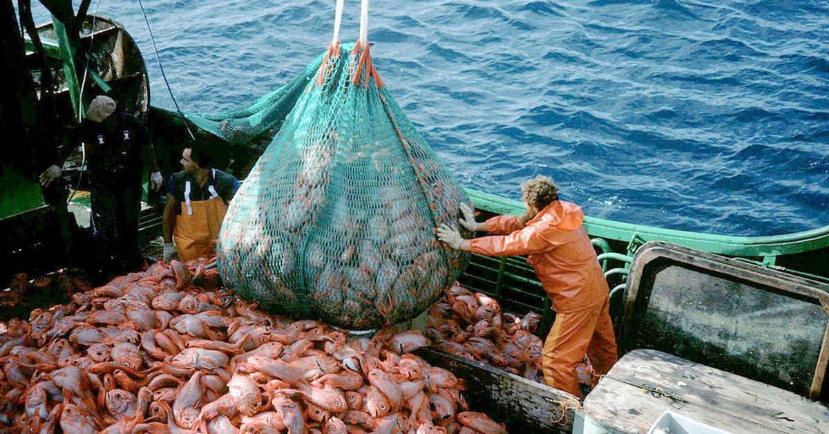 A pesar del coronavirus, la pesca aportará este año unos USD 1.300 millones  en exportaciones - Infobae