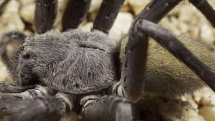 (Museo de Historia Natural de San Diego)