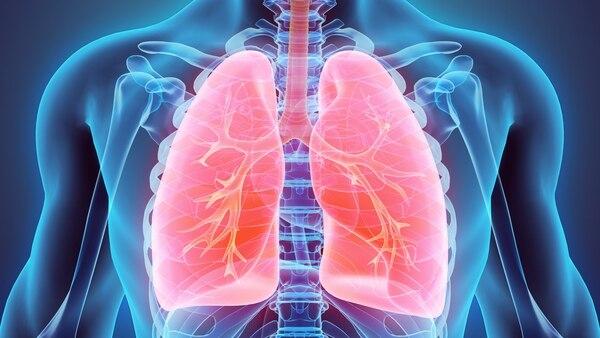 Ultimos Avances en Ciencia y Salud - Página 14 Pulmones-1