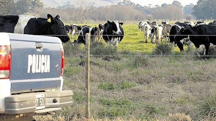 Productores del sur de Santa Fe alertaron sobre el aumento del robo de ganado