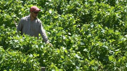 La industria de los vinos sigue siendo la más fuerte de la provincia, pero esperan poder potenciar otras áreas para seguir creciendo en materia de exportación. Foto: Fernando Calzada.