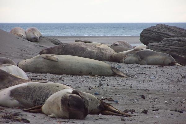 En la región se pueden observar otros animales como elefantes y lobos marinos, además del pingüino de Magallanes