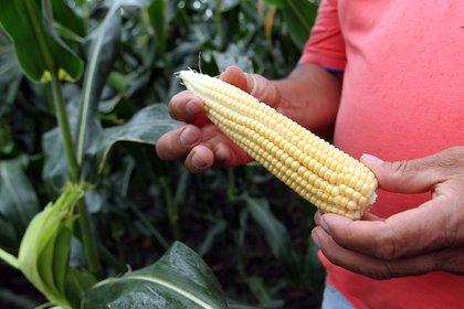 La agricultura ecológica se considera una herramienta para el desarrollo rural sostenible y la reducción de la pobreza. EFE / MAURICIO DUEÑAS CASTAÑEDA / Archivo