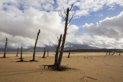"""Los expositores celebraron el """"regreso de la crisis ambiental a la agenda de los líderes globales EFE/Nic Bothma/Archivo"""