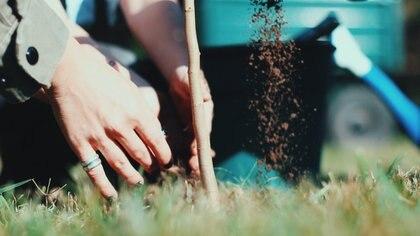 Seamos un Árbol ha trabajado en la plantación de árboles Buenos Aires con miras a la plantación en todo el país