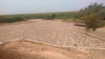 Los especialistas aseguran que uno de los motivos de la mortandad de peces es la sequía que afecta desde hace meses a la provincia