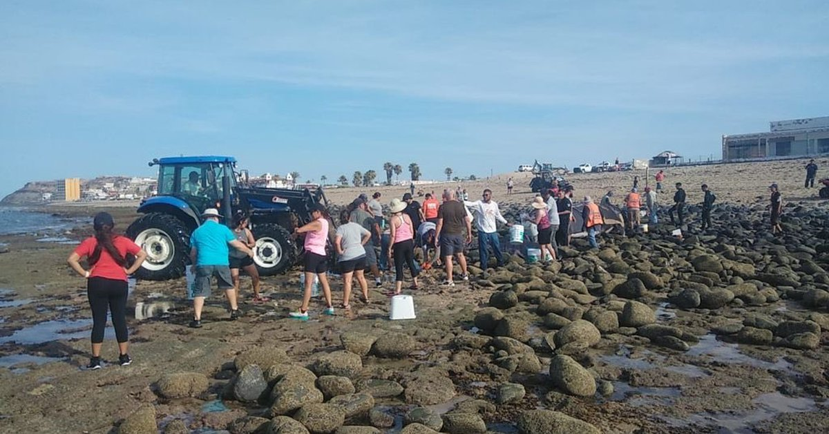 They rescued a Whale that was stranded in Sonora