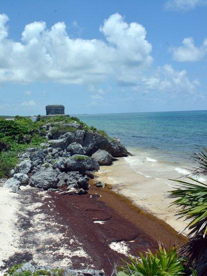 La presencia de sargazo en Mahahual, Puerto Morelos, Playa del Carmen, Tulum y Xcalak es excesiva (Foto: archivo)