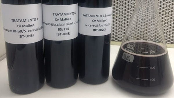 Mostos del malbec, en laboratorio