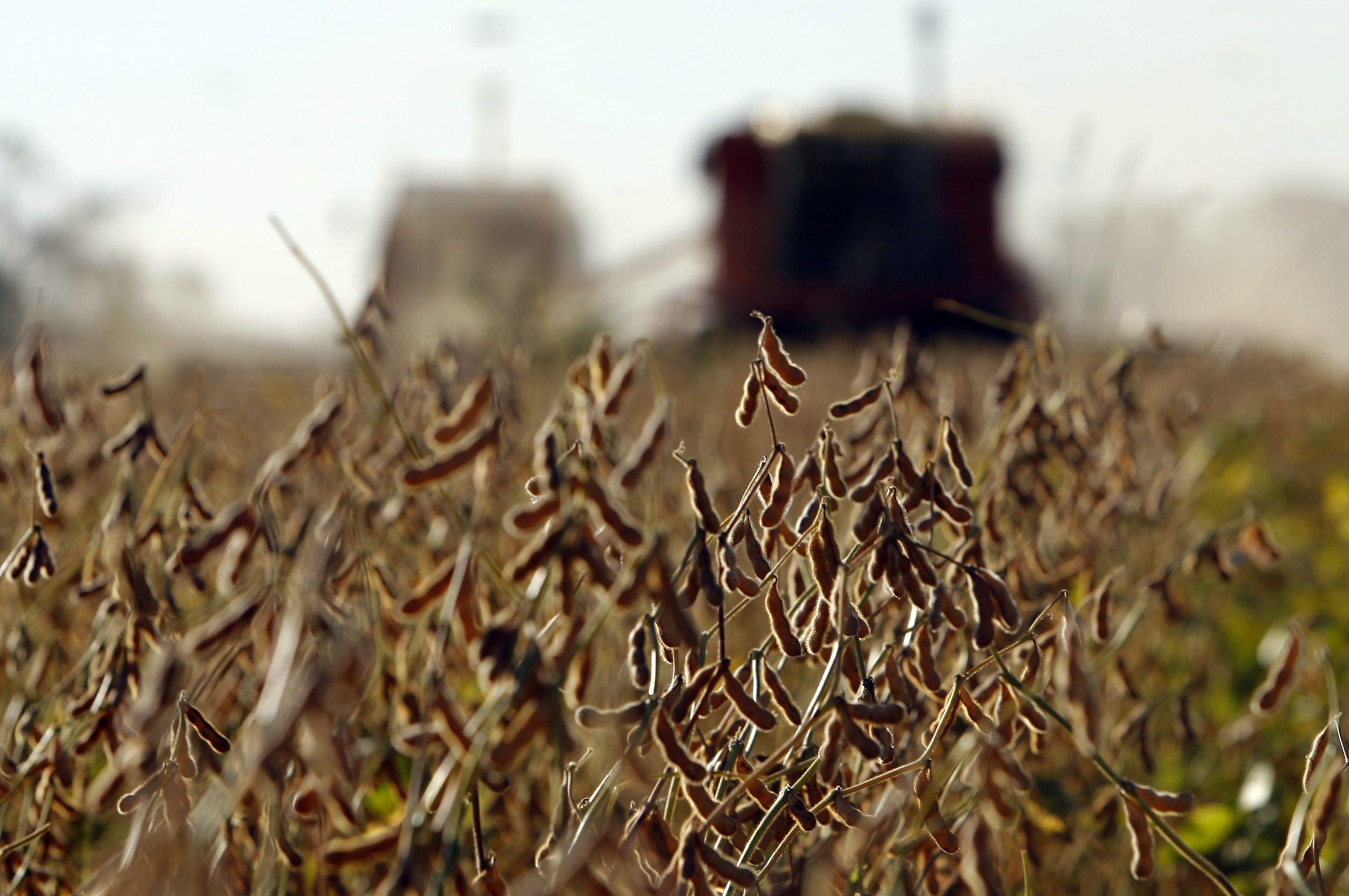 Sigue subiendo el precio de la soja (EFE)