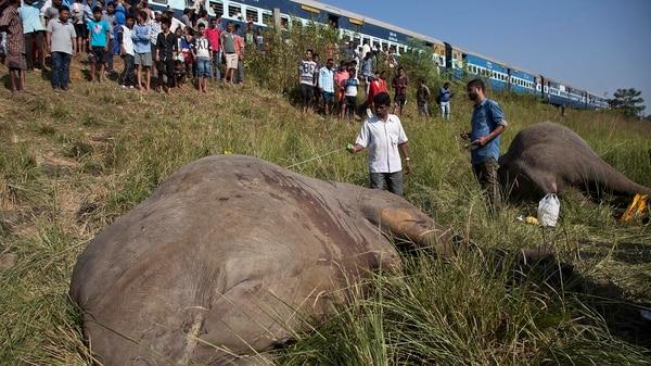 El tren de pasajeros estuvo cerca de atropellar a varios elefantes más (AP)