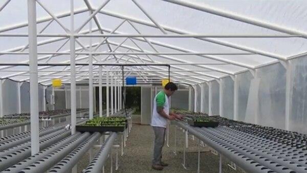 El invernadero te permite controlar y regular las condiciones climáticas