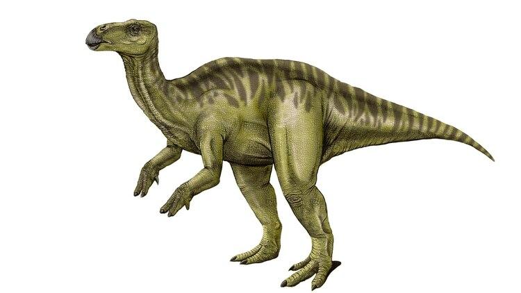 Una nueva especie de dinosaurio ornitópodo del Cretácico Superior fue hallada en Neuquén (paleoymás)