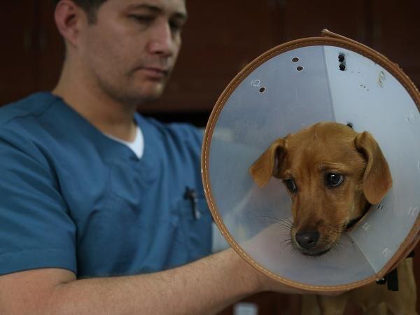 Lupita junto con el médico veterinario Sebastián Piedrahita. (Gentileza El Tiempo)